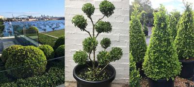 PlantBiz Horticulture Services