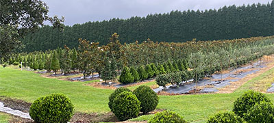 Plant Biz Peats Ridge